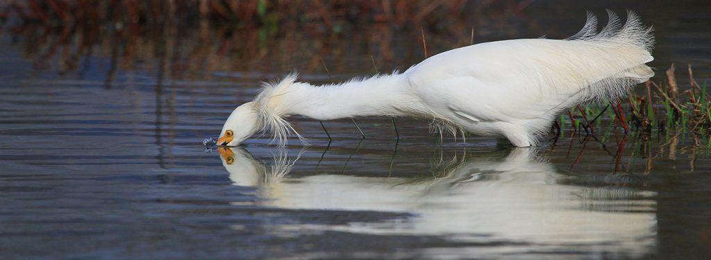 Aprende de conservación y aves en los humedales costeros del río Moncul, lago Budi, río Toltén y Queule